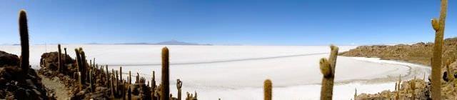 Cacti Bolivian Salt Flats