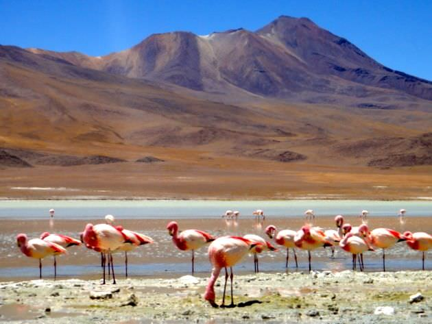 Flamingos Bolivian Salt Flats Weirdest Places on Earth