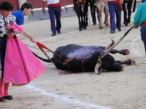 bull dying bullfighting in Spain