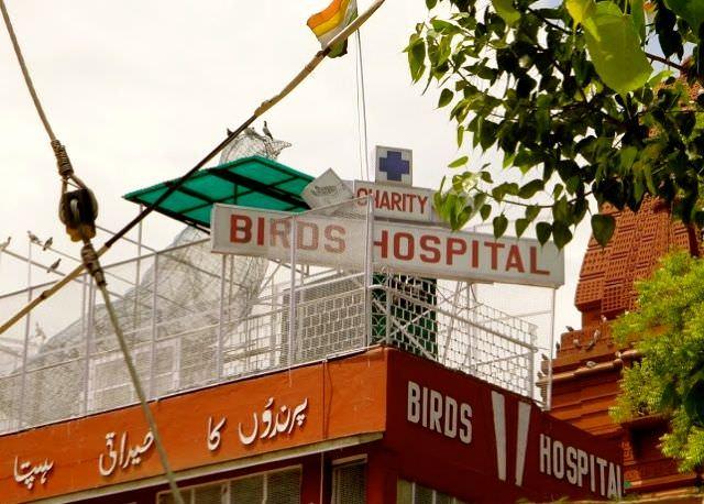 Bird Hospital Weirdest Places on Earth