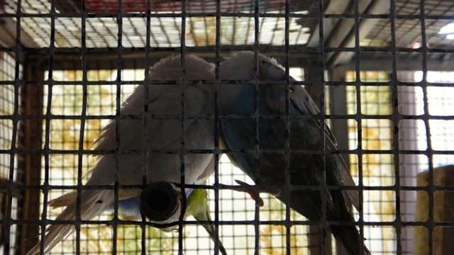 Love birds Weirdest Places on Earth