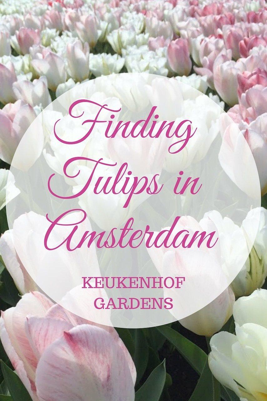 See the tulips in Amsterdam Keukenhof Gardens