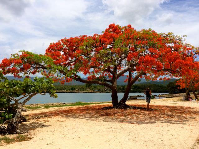 Best Beaches in Cuba La Boca tree