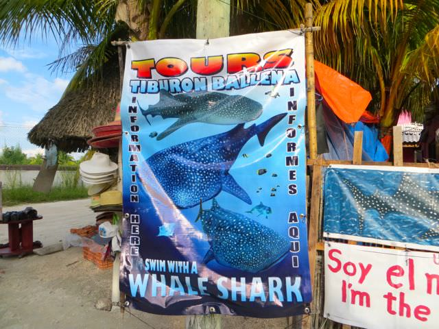 Swimming with whale sharks in Mexico tour sign