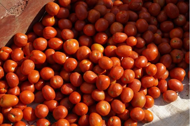 Inle Lake Tour local tomatoes
