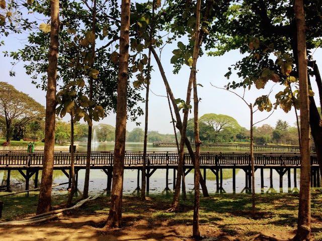 Things to do in Yangon Bogyoke Park Trees