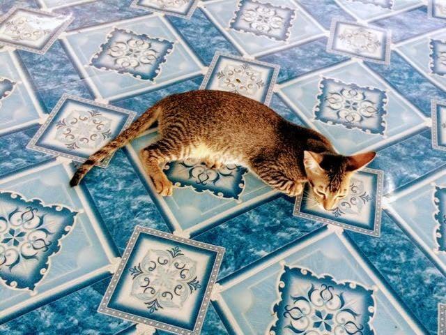 Things to do in Yangon Cat