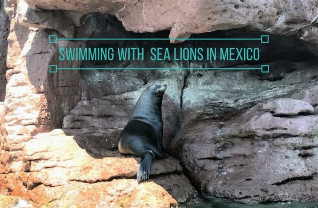 Swimming with Sea Lions in Mexico
