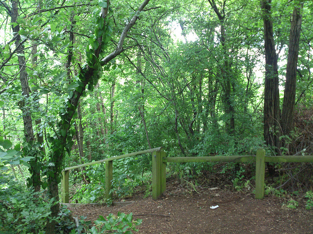 Things to do near King's Cross St Pancras London Camley Street nature Park