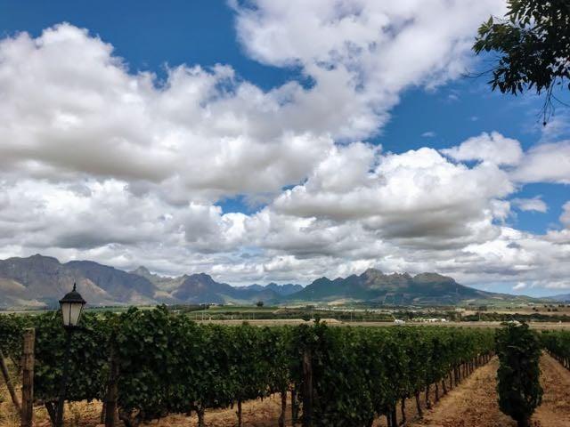 Cape Town Tours Stellenbosch