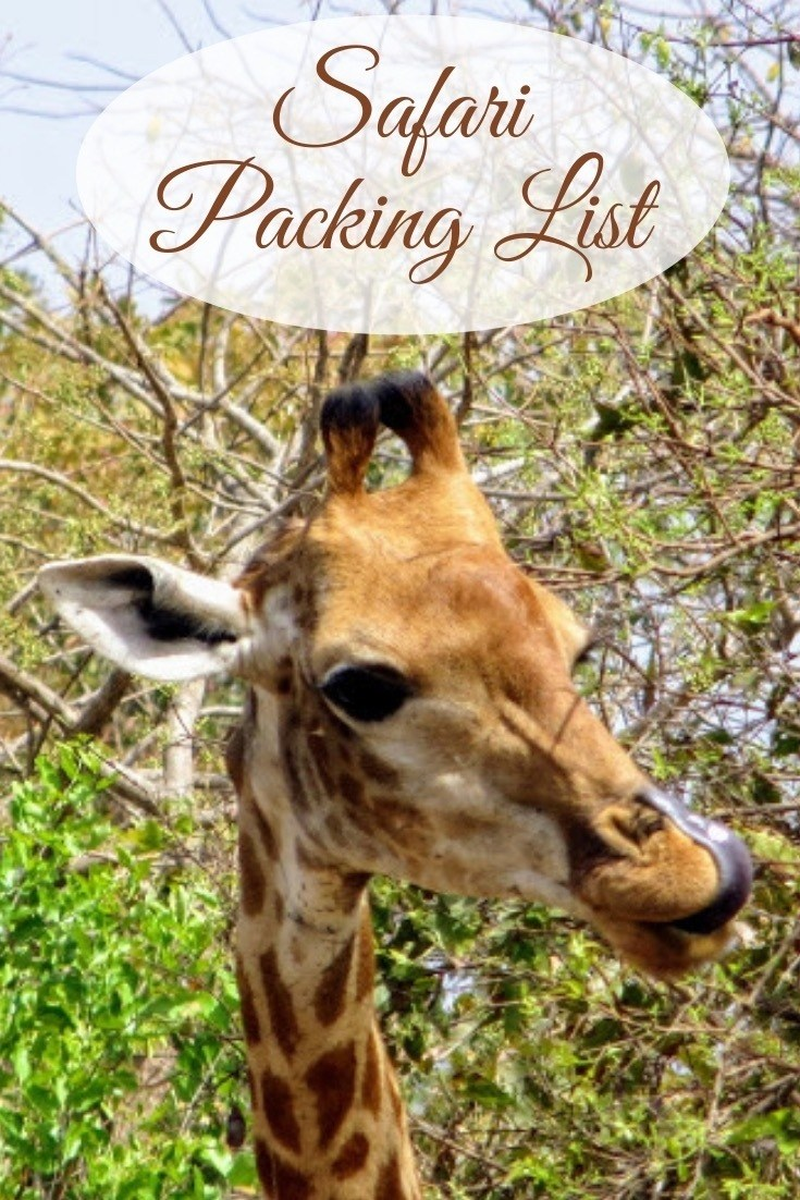 giraffe eating from trees in Kruger National Park on safari
