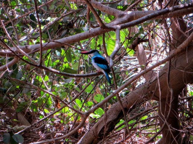 Safari packing list bird