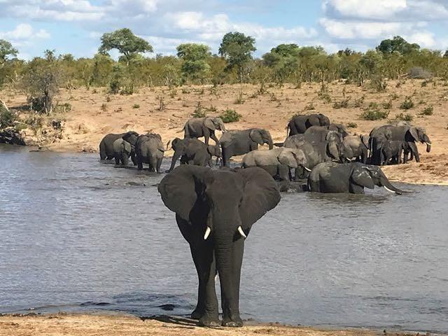 Safari packing list - elephant