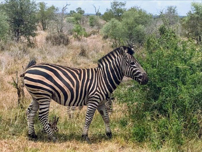 Kruger National Park Safari from Johannesburg 12