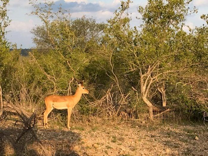 Kruger National Park Safari from Johannesburg 2