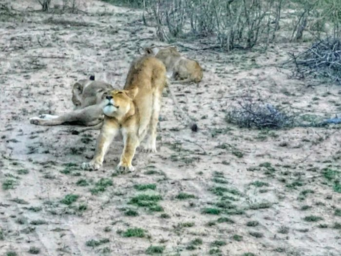 Kruger National Park Safari from Johannesburg 4