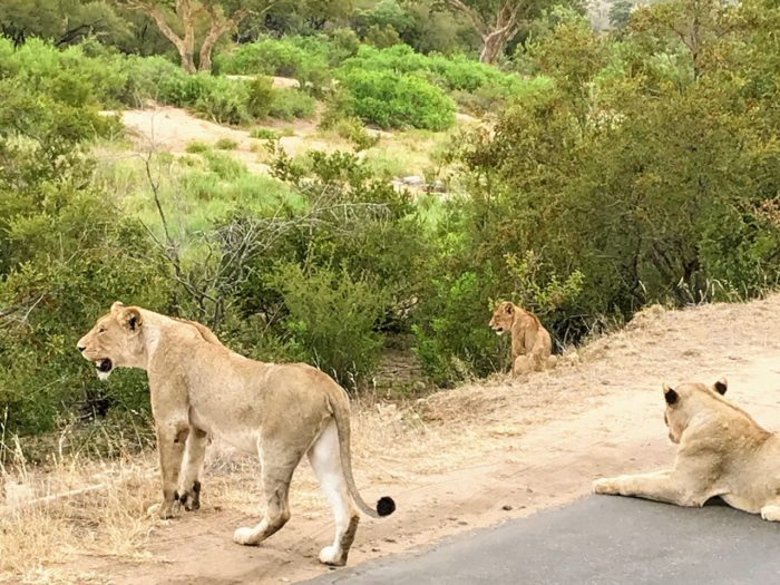 Kruger National Park Safari from Johannesburg 9