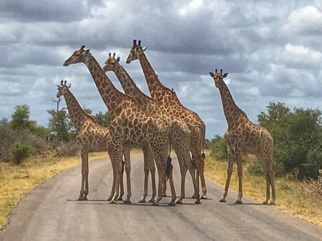 Kruger Safari from Johannesburg - giraffe
