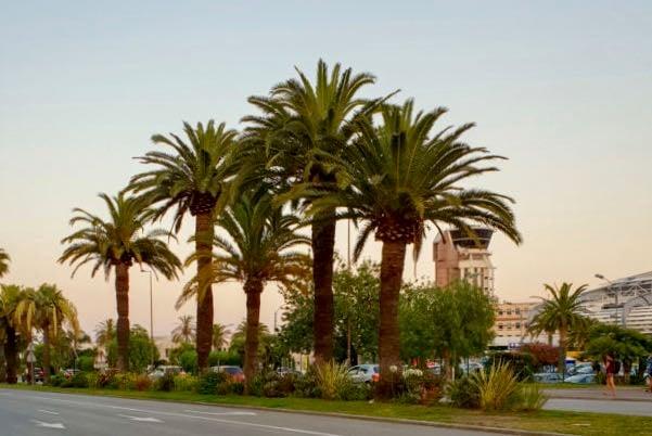 Nice-to-Sainte-Maxime Villa in the French Riviera