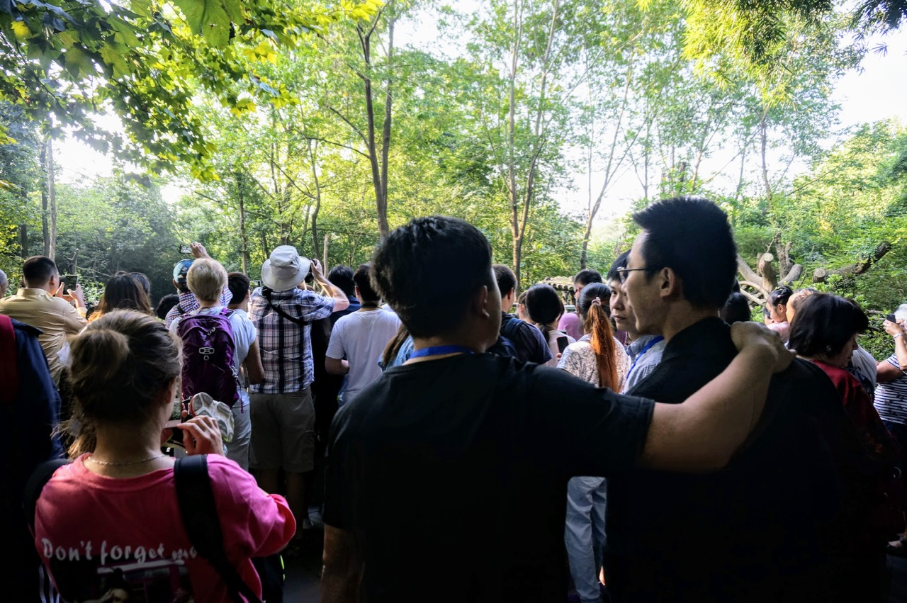How To Do Your Own Panda Tour in Chengdu 6