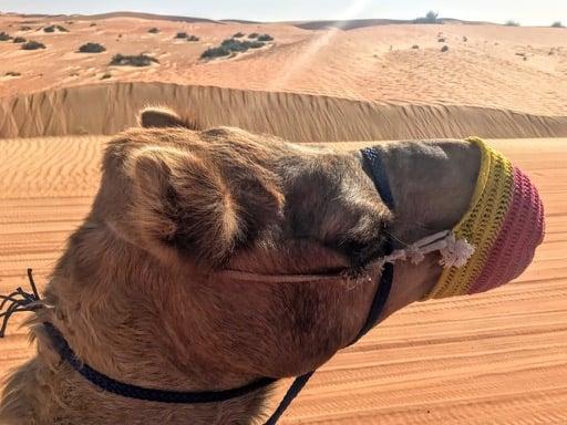 things to do in Dubai - desert safari