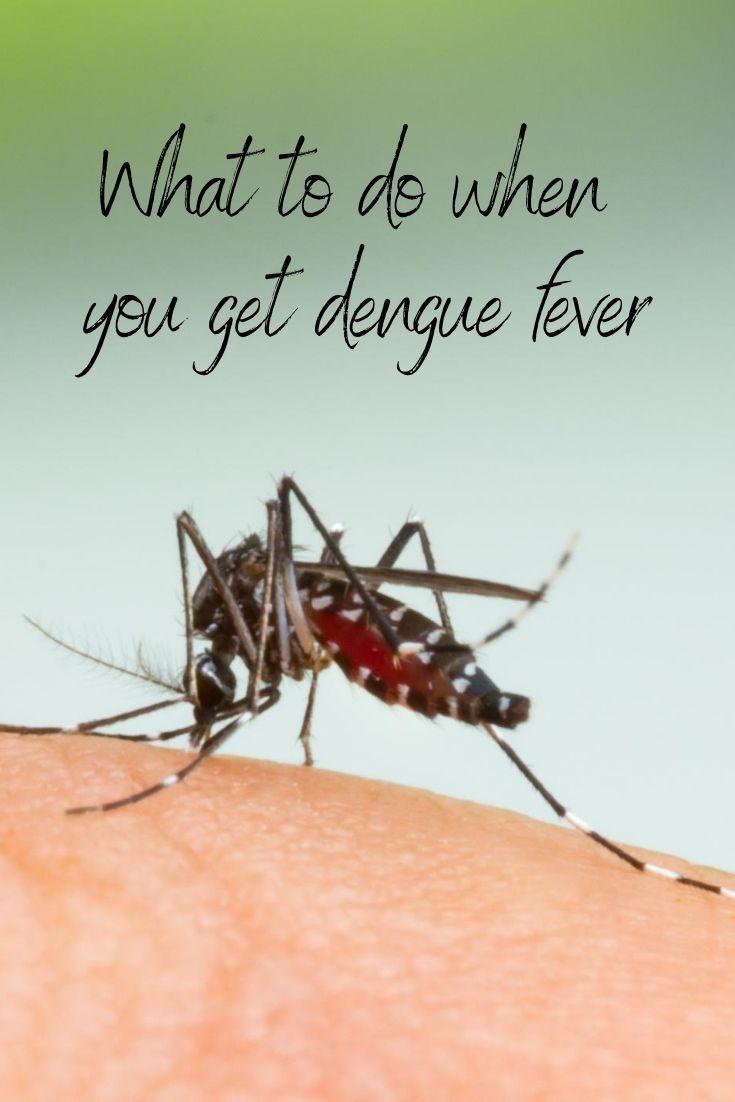 mosquito biting arrm