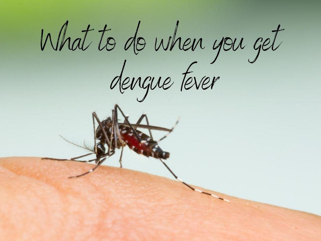 mosquito biting arm