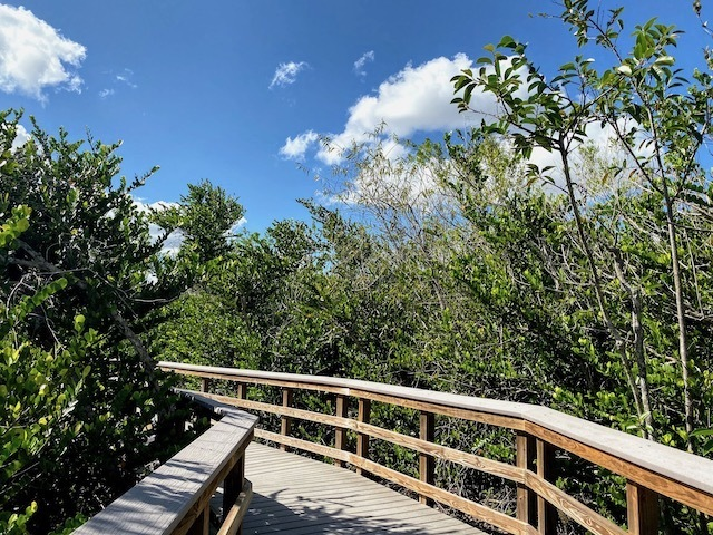 Things To Do In the everglades boardwalk trails