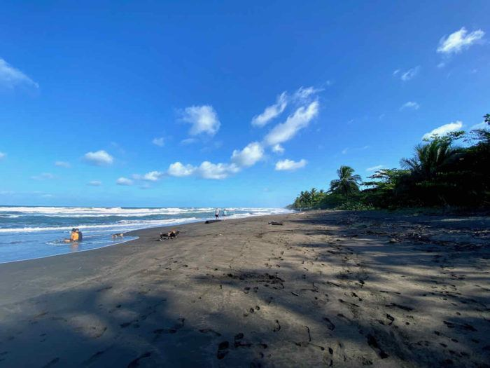 wild black sand beach in tortuguero national park in costa rica