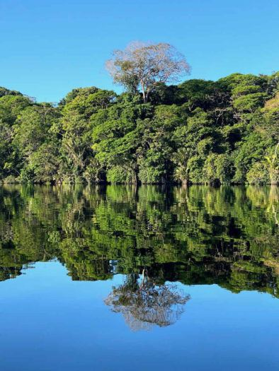 mirror image of trees on water in tortuguero national park