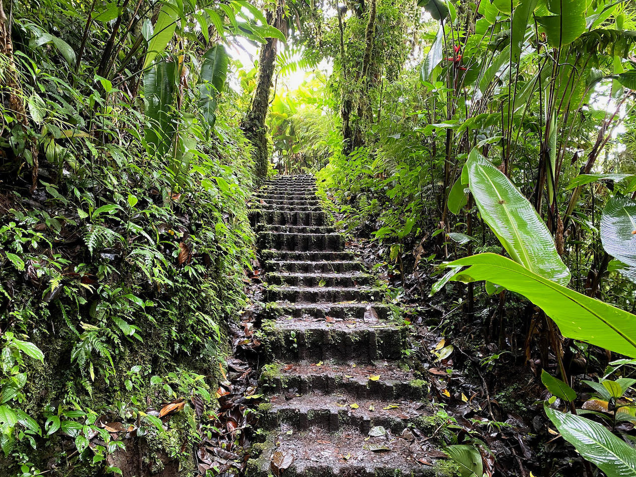 trail in the cloud forest in Monteverde Costa Rica