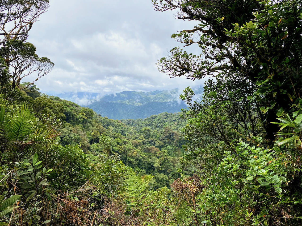 panoramic view over monteverde cloud forest costa rica