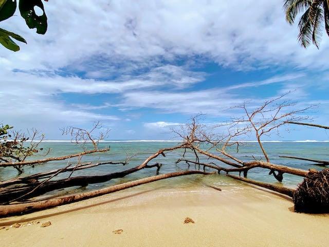 Wild beach with fallen trees in Cahuita Costa Rica