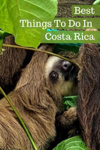 close up on a sloth in costa rica