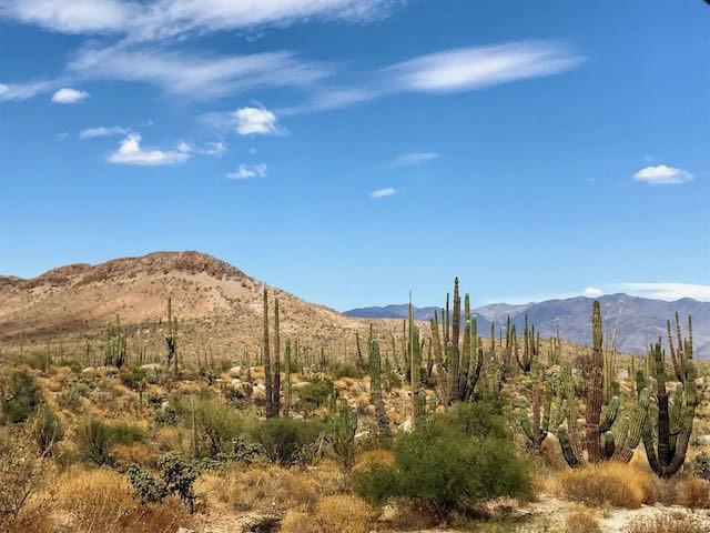 desert and cacti in baja california mexico