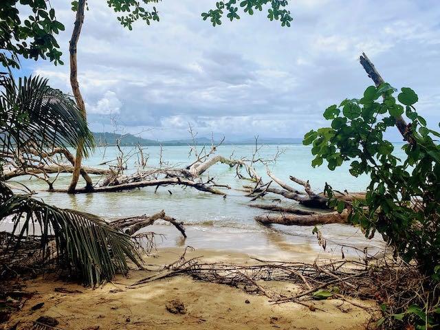 fallen trees on a wild beach in costa rica